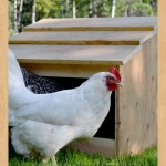 nestling box woodworking plans